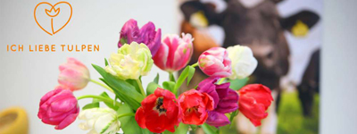 MediaScience lanceert internationale tulpencampagne
