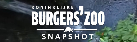 Destination marketing - Burgers Zoo ontwikkelt 360 gradenvideogame
